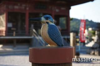鳥さん16