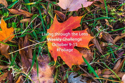 NEW WEEKLY GROUP CHALLENGE by Geoff Livingston
