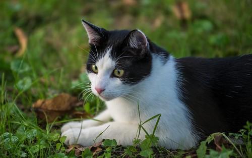 cats animals croatia catsdogs podravina hrvatska nikkor8020028 nikond600