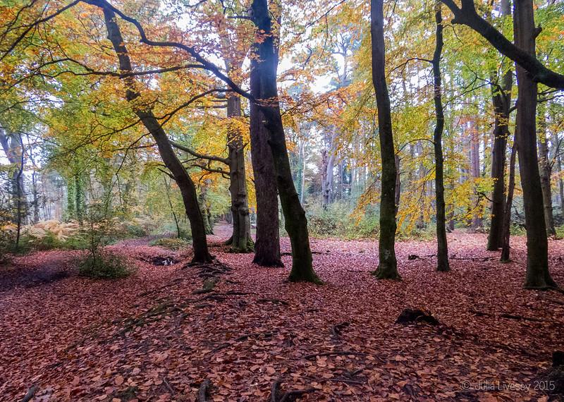 Longmeadow Lane woods