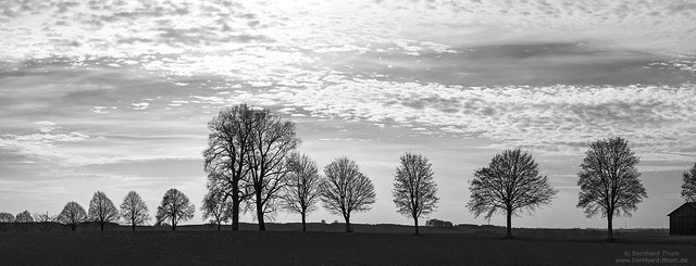 Bavarian tree silhouettes