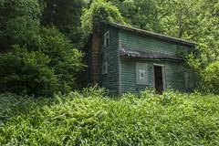 fern's house.