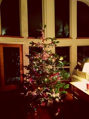 Tree cut down and decorated.