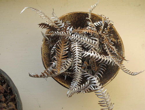 a bowl of silver-painted fern