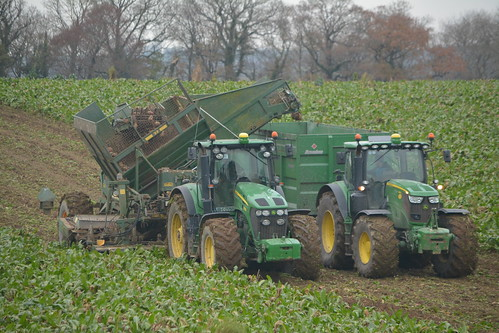 john deere 7930 tractor thyregod t7 triple row beet harvester filling broughan engineering mega hispeed trailer drawn 6215r jd green mallow sugarbeet fodderbeet fodder sugar winter feed county cork ireland irish farm farmer farming agri agriculture contractor field ground soil earth cows cattle work working horse power horsepower hp pull pulling cut cutting crop lifting machine machinery nikon d7100 crops collecting collect tillage traktor tracteur traktori trekker trator ciągnik