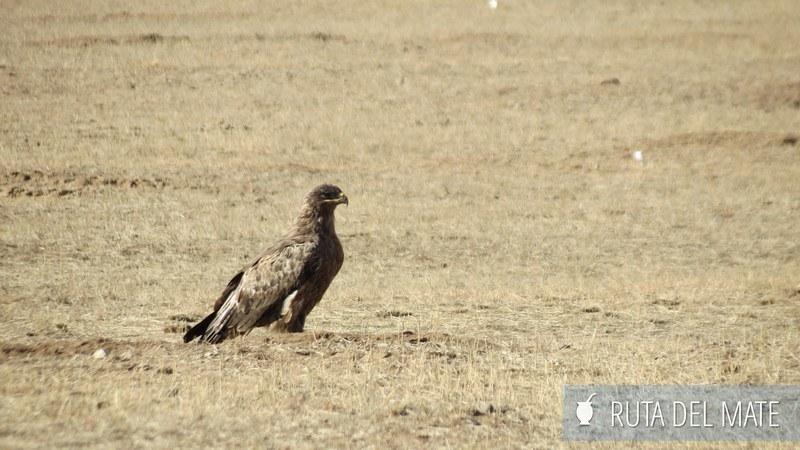 Desierto Gobi Mongolia (31)