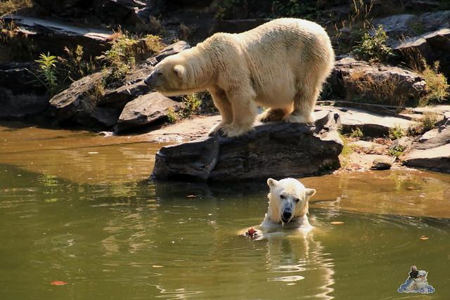 Tierpark Berlin 23.08.2015  046