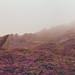 Foggy Start - Ramshaw Rocks by JamesPicture