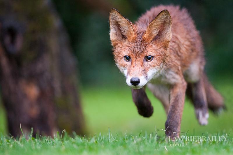 Nocturnal Hunter