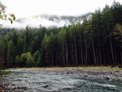 Quinault River from the Graves Creek campground, Olympic National Forest