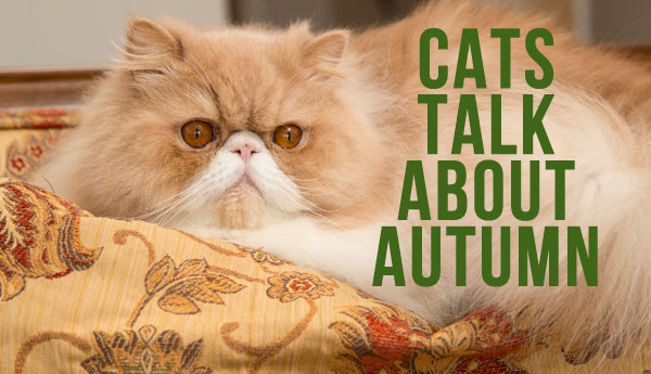 cats-autumn-slang