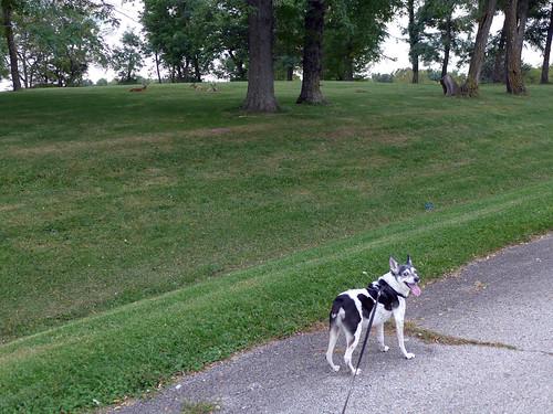2015-09-23 - Walking at Smithville Lake - 0072 [flickr]