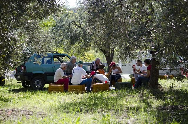 olive raccolta 2015_7346