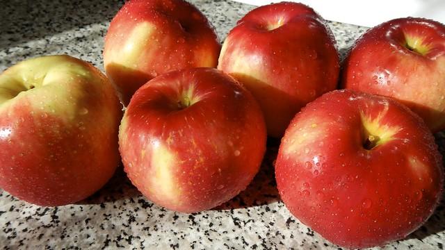 Apple Galette 1