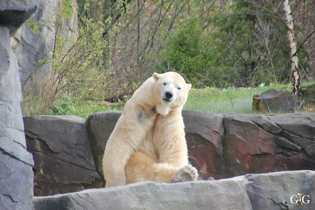 Besuch Winter Zoo Hannover 28.11.201515