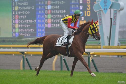 20151108 東京5R 返し馬 ルフレドパシオン
