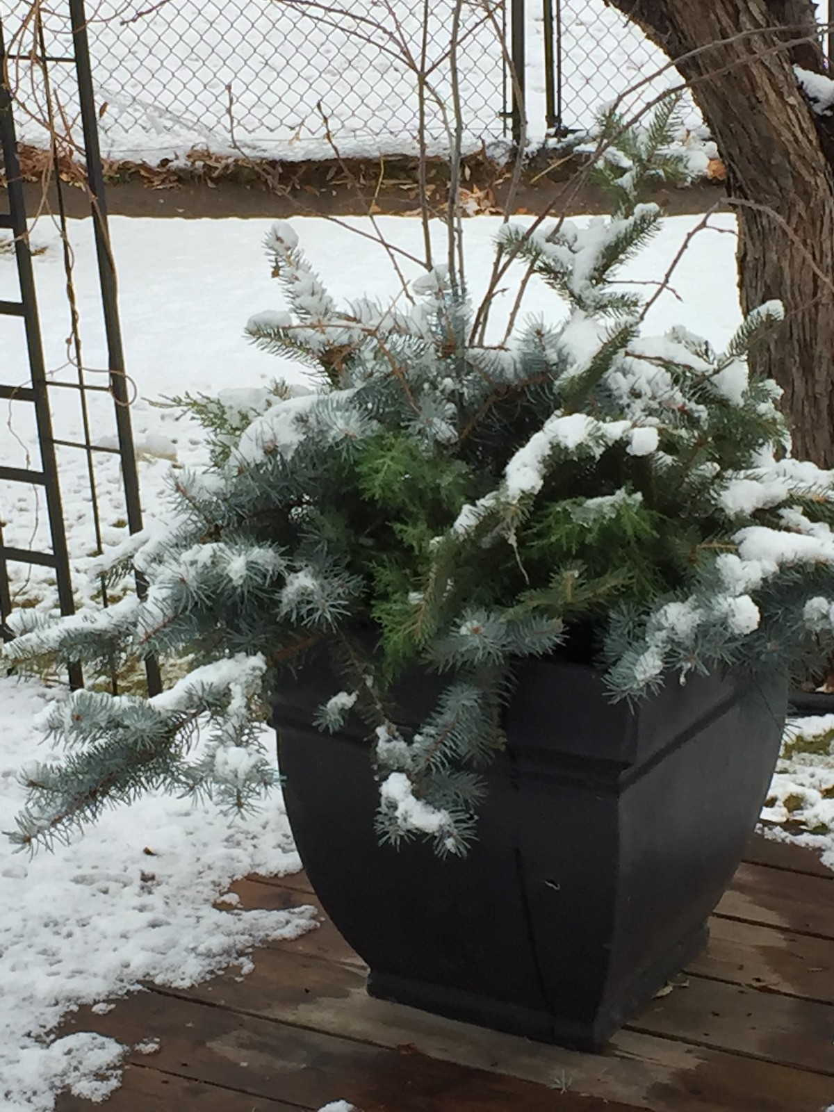 outdoor evergreen planters with snow