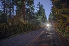 Wind Storm damage on Bainbridge Island