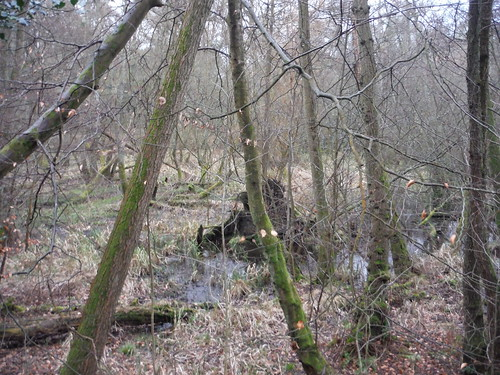 Moor Park Nature Reserve