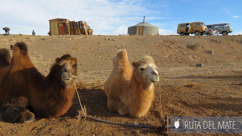 Desierto Gobi Mongolia (35)