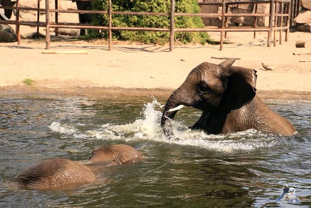 Tierpark Berlin 16.08.2015  0147