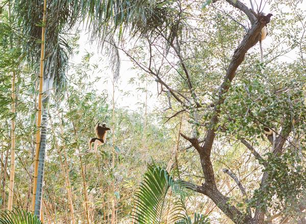 RYALE_Madagascar_Blog1_028