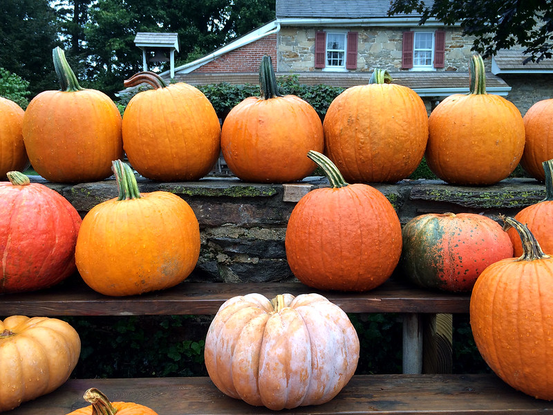 Pumpkins at the Farm Market