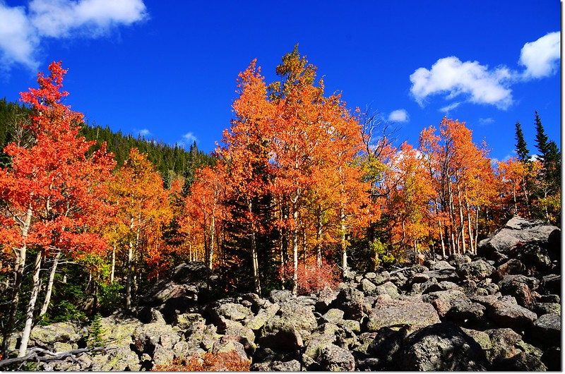 2015 Rockies in Fall, Bear Lake Area (20)