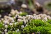 Pilze by FotografieDanielZiegler