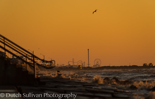 ocean galveston birds sunrise texas unitedstates ships