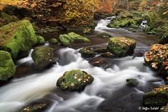 Rapids in autumn / Herbstliche Stromschnellen