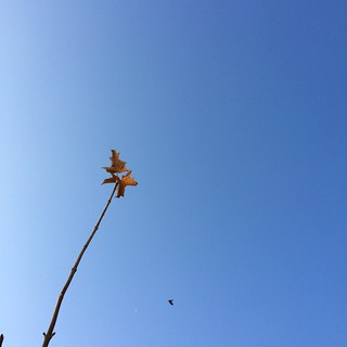 Die letzten Blätter