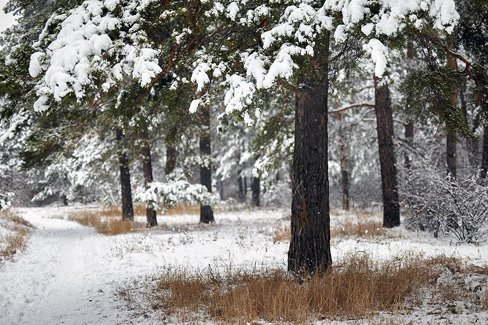 Тёплый снег 1