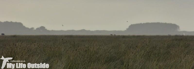 P1160154 - Llanrhidian Marsh