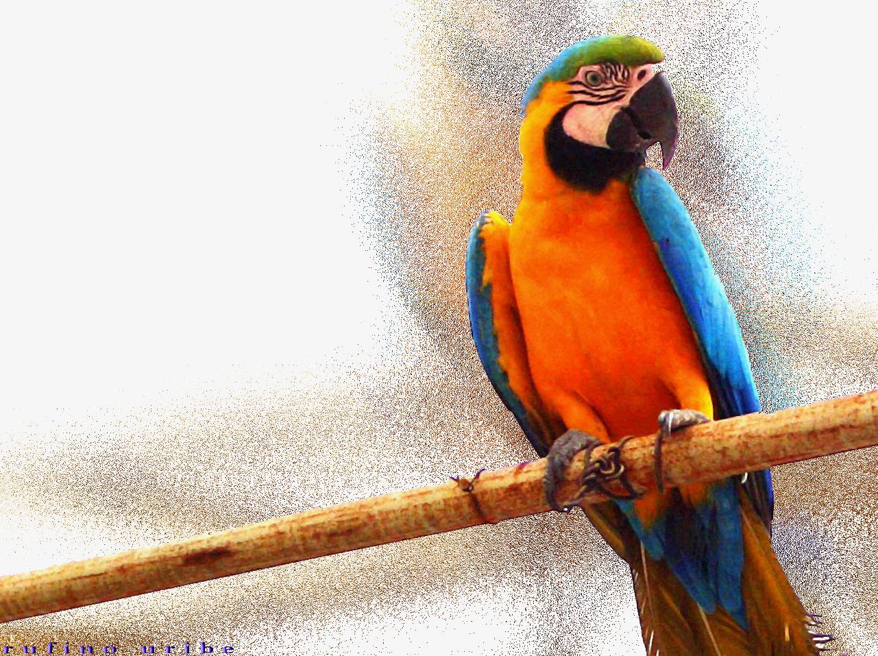 animales salvajes del peru