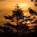 Sunset by Michael Aston