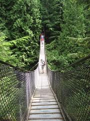 suspension bridge, tree, green, forest, rope bridge, bridge,