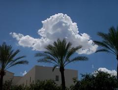 St. Joseph's, Noon in Phoenix