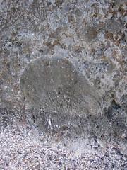 20060718 Saipan 396