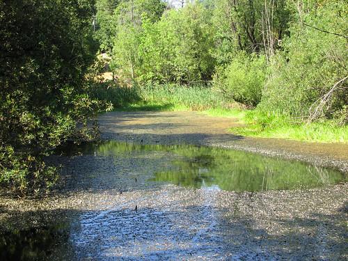 summer water beelerpond brooktrails