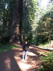 Alicia, Lady Bird Johnson Grove, Redwoods National Park, California