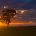 Warming the Tree... by Goldmanoz