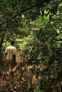 Rainforest Axel Rouvin