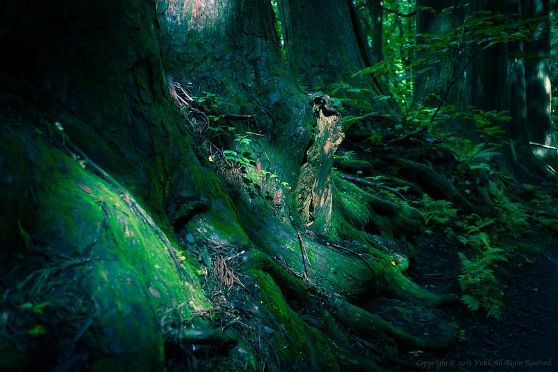 Deep forest5