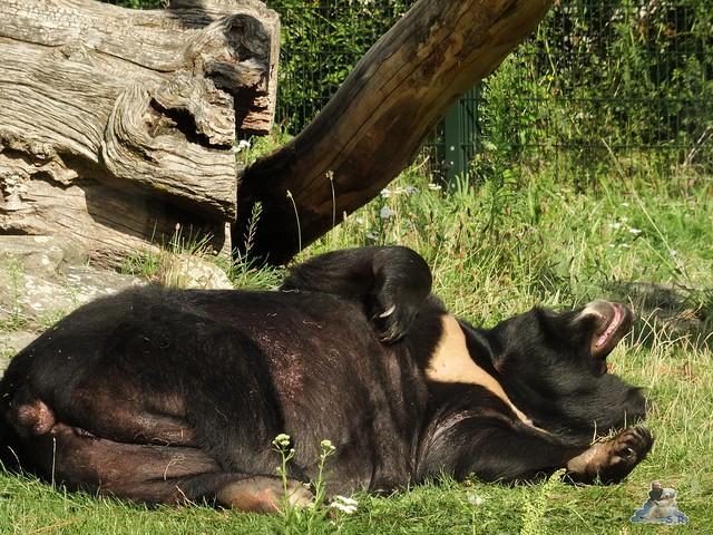 Zoo Berlin 28.08.2015  082