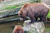 20150921_92 - Grizzly by grasso.gino