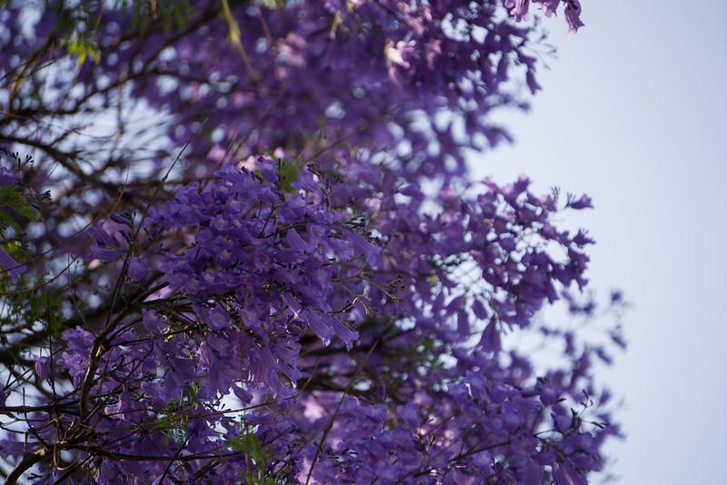 20151018 - 012 - MonteCasino Bird Garden