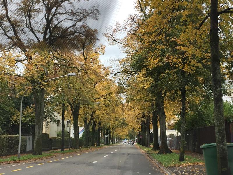 Autumn, Weissenstr. Langendorf