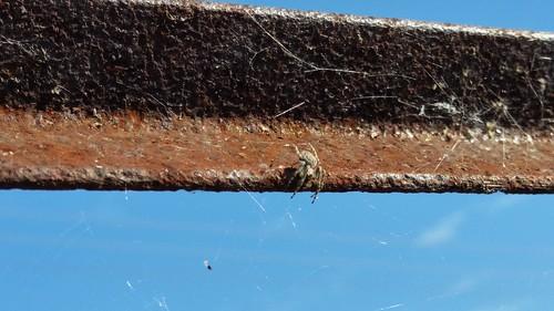 Spider Rail - 20151011_150227
