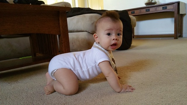 Parker at 8 Months Old | shirley shirley bo birley Blog